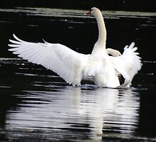 Swan by Stojs