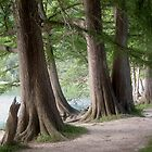 Yesterday's Trees by Wendy J. St. Christopher