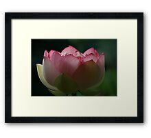 Soft Touch Lotus Framed Print