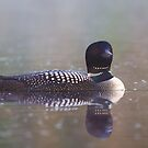 Common Loon - Wilson Lake by Jim Cumming