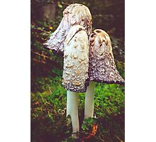 shaggy ink cap (Coprinus comatus)  Photographic Print