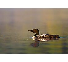 Common Loon - Wilson Lake Photographic Print
