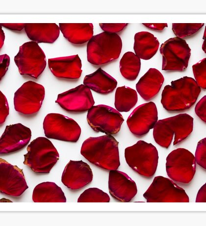 Wilted red rose petals on a white background Sticker
