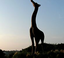 Reaching Giraffe by TMPhoto