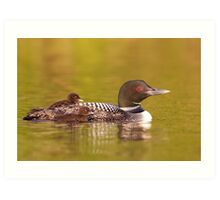 Common loon twins Art Print