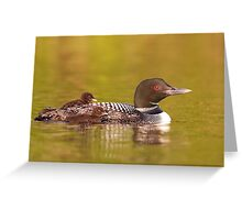 Common loon twins Greeting Card