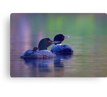 Morning outing - Common loon Canvas Print