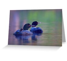 Morning outing - Common loon Greeting Card