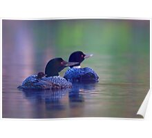 Morning outing - Common loon Poster