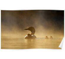 Loons in the mist - Common Loon Poster