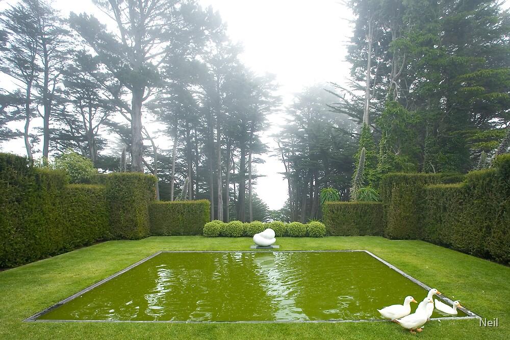 Ducks in the Mist by Neil