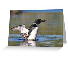 Common loon spray Greeting Card