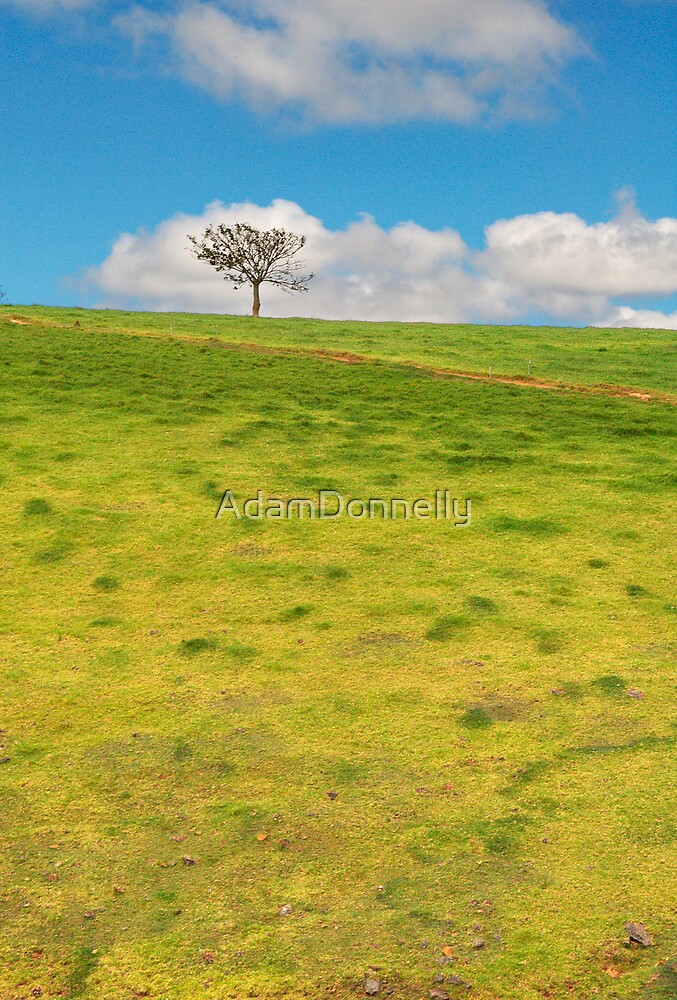 Tree on a Hill by AdamDonnelly