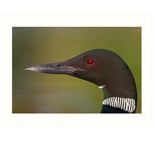 Common Loon profile Art Print
