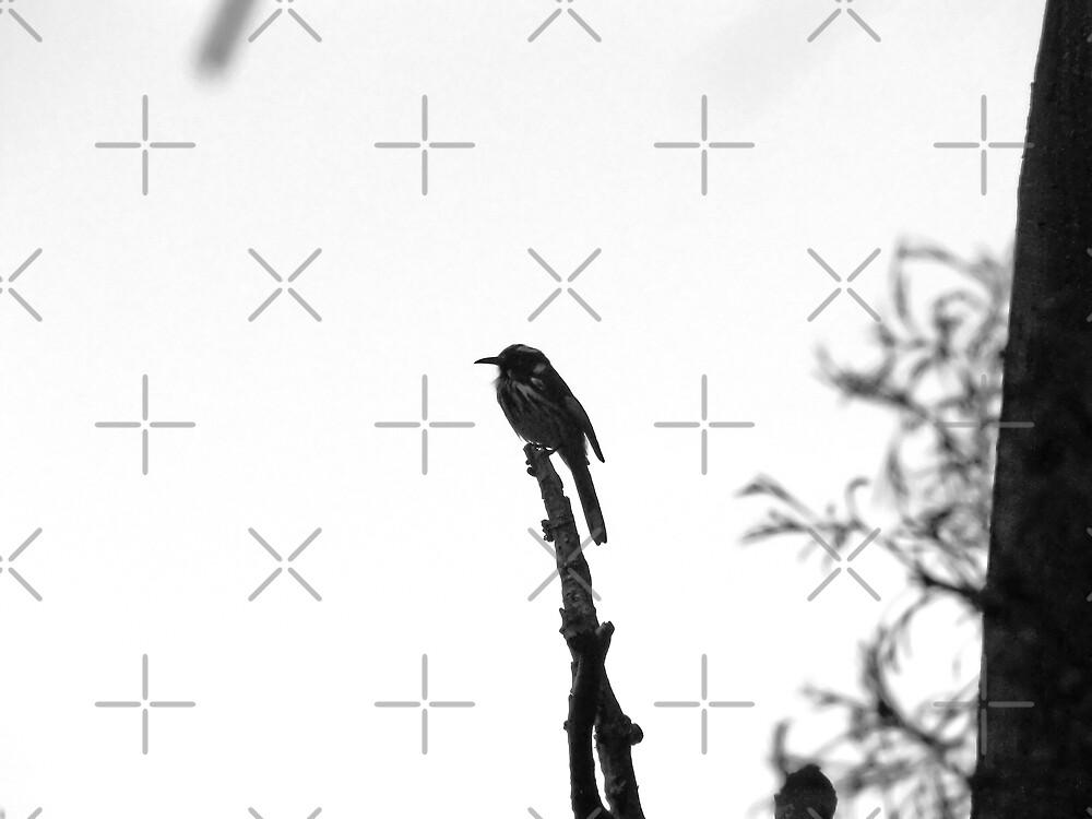 Against the sky by Sandra Chung