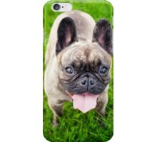 Cute French bulldog puppy, dog looking up 3 iPhone Case/Skin