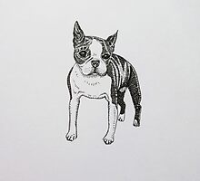 Pen and Ink Boston Terrier  by LauraCaldwell