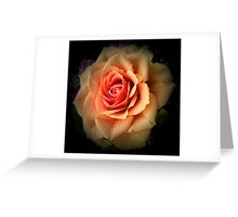pale orange rose Greeting Card