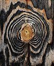 iPad Case.  Wood knot. by Alex Preiss