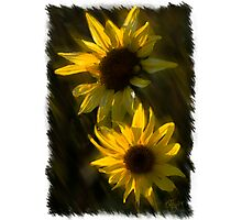 SUNFLOWERS TOGETHER Photographic Print