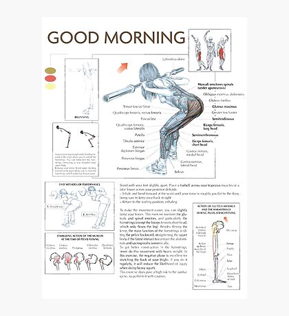 Good Morning - Exercise Muscle Diagram Photographic Print