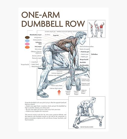 Dumbbell Row - Exercise Muscle Diagram Photographic Print