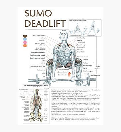 Sumo Deadlift - Exercise Muscle Diagram Photographic Print