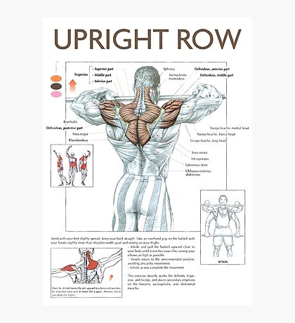 Upright Row - Exercise Muscle Diagram Photographic Print