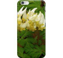 Dutchman's Breeches, Wildflower iPhone Case/Skin