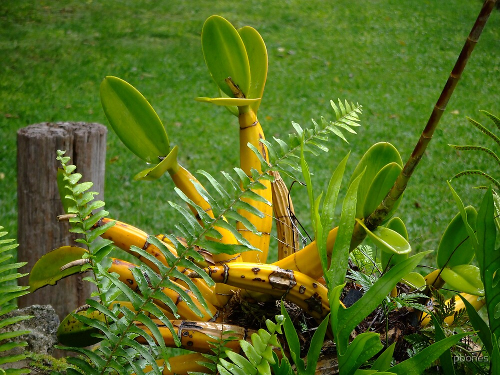 Unknown Yellow Plant by pbones