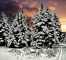 SNOW ON THE PINES by MichaelDTaylor