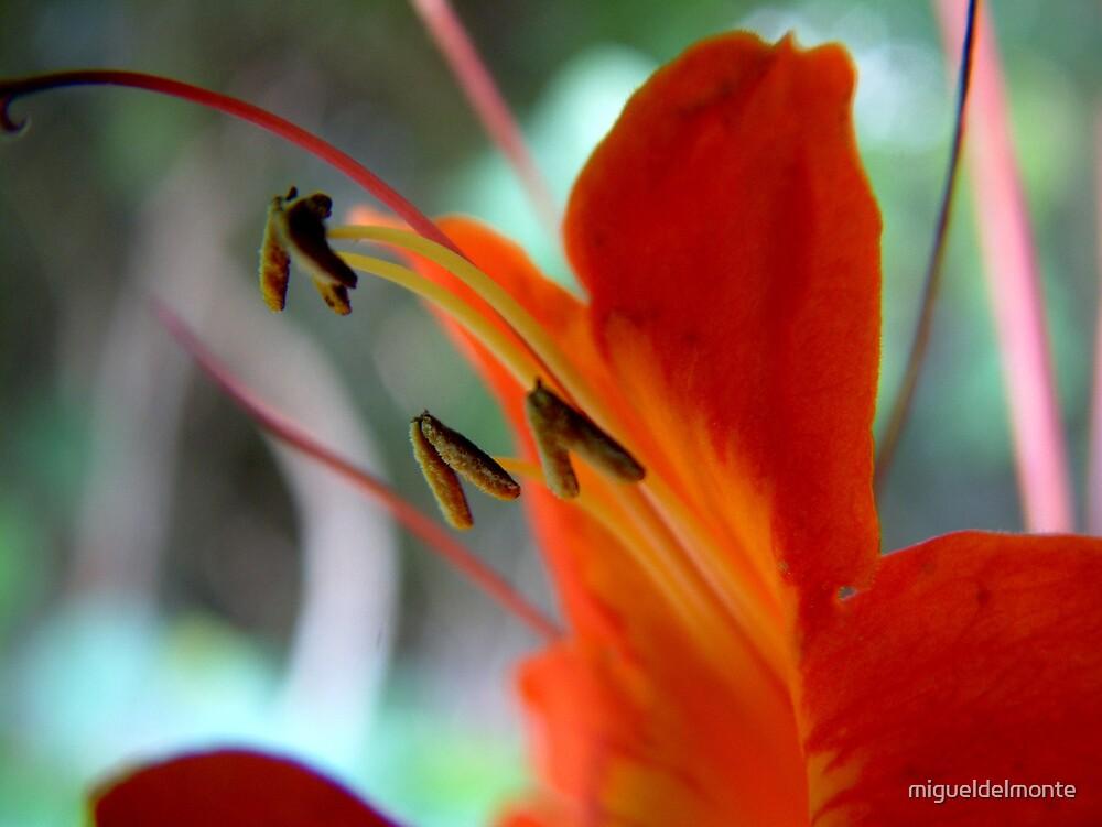 Petals by migueldelmonte