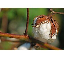 100% Cotton Photographic Print