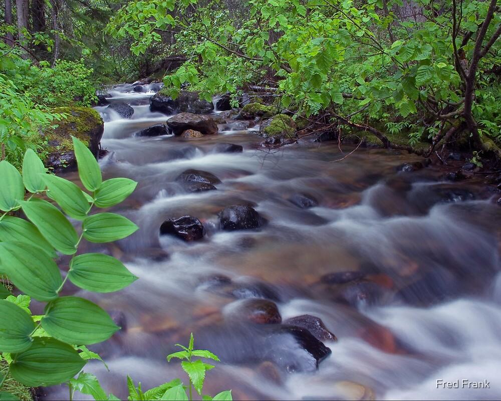 Fern Creek, Glacier NP by Fred Frank