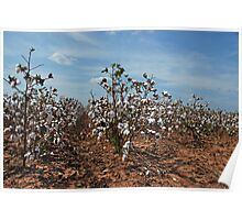 In Dem Ole Cotton Fields Back Home Poster