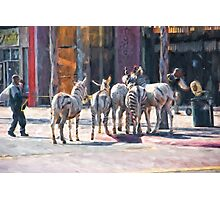 Faux Zebra's Photographic Print