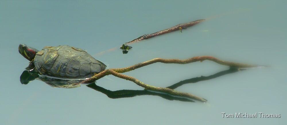 Turtle...turtle.... by Tom Michael Thomas