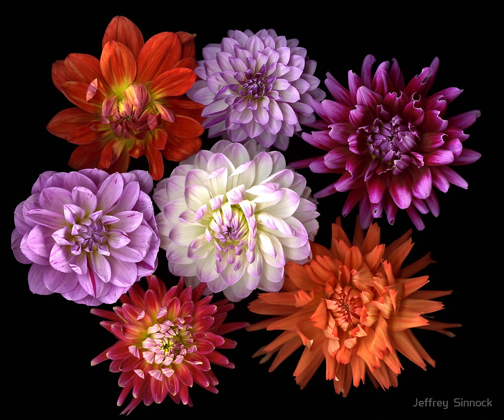 Bouquet of Dahlias by Jeffrey  Sinnock