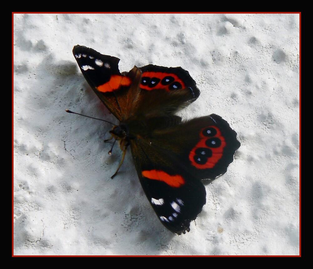 Broken Butterfly by Jenni77