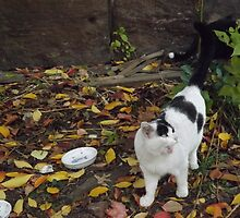 Cat Portrait, Brunswick Community Garden, Jersey City by lenspiro