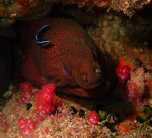 Eel in a Reef by Greg Birkett