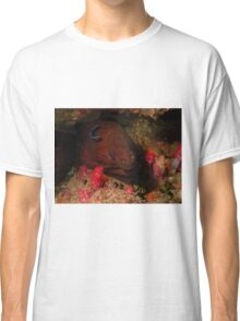 Eel in a Reef Classic T-Shirt
