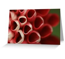 Red & White Greeting Card