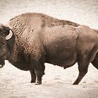 Vintage Buffalo by brotbackgeraet