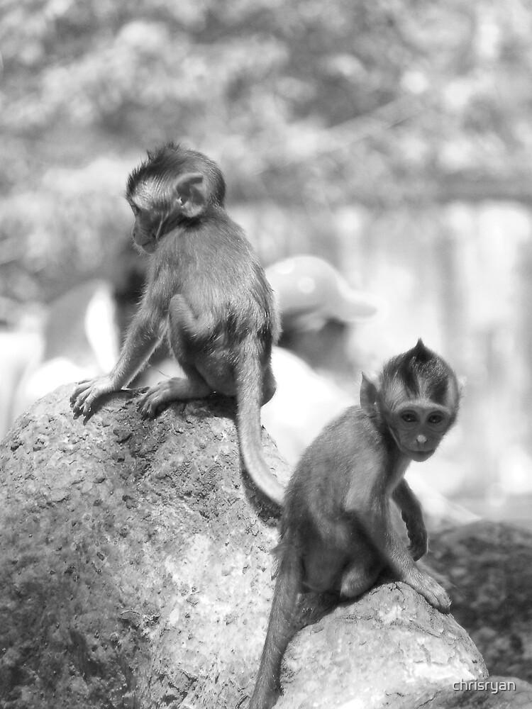Two Monkeys by chrisryan
