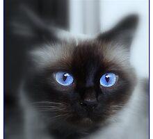 Blu eyes 2 by Sorin  Reck