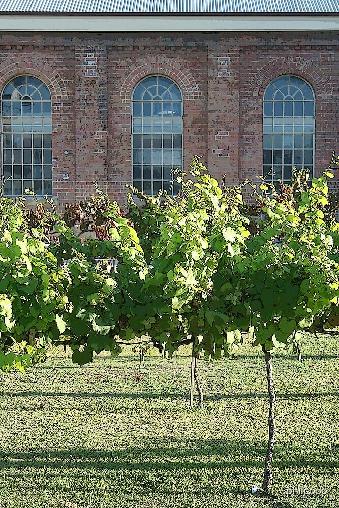 The Vineyard by philcoop
