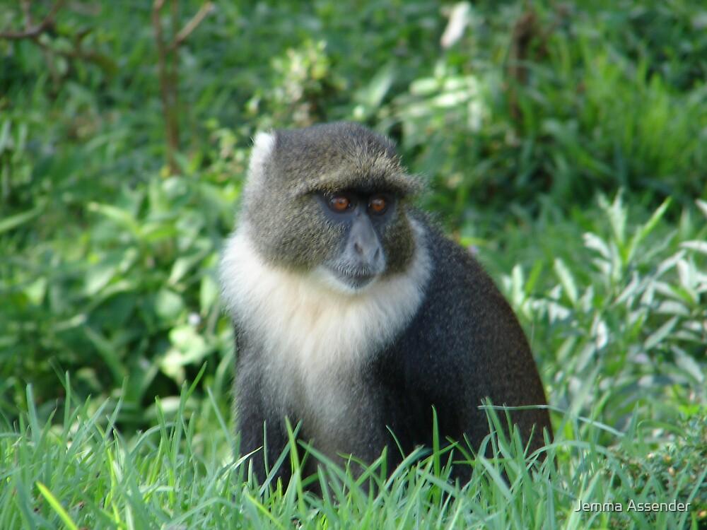 Sky Monkey by Jemma Assender