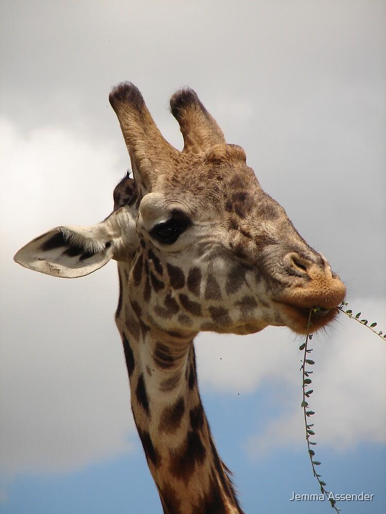 Giraffe by Jemma Assender