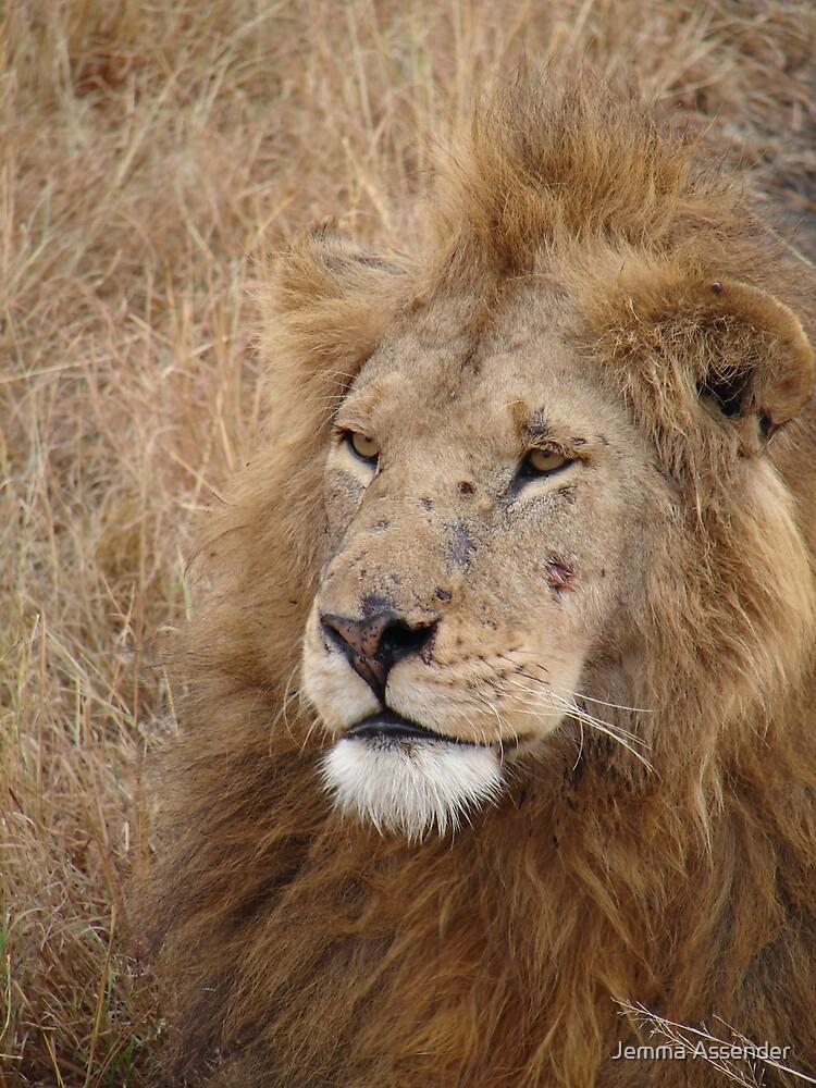 Lion by Jemma Assender